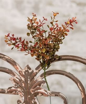 Picture of Red Peppergrass Pick