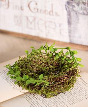 Forest Moss Bird Nest