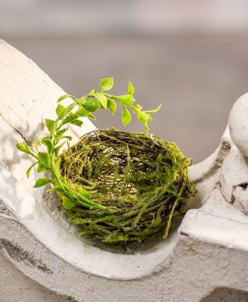 """Forest Moss Bird Nest, 3 1/2"""""""
