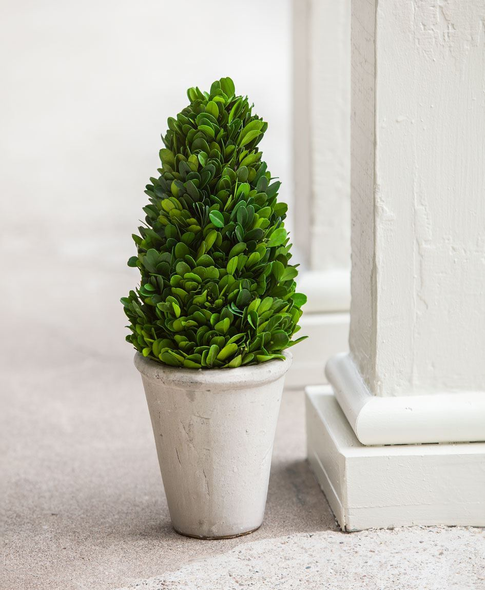 Craft House Designs Wholesale Boxwood Cone Topiary 13 189