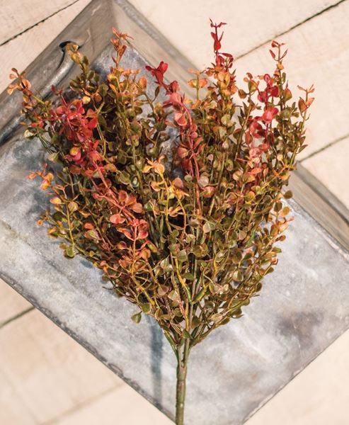 Picture of Red Baby Grass Bush