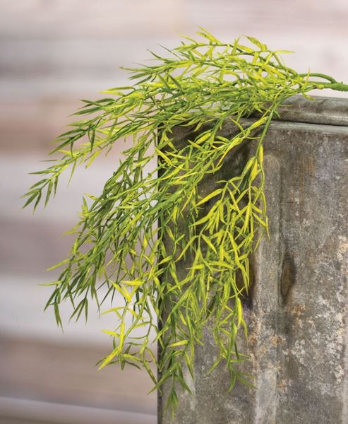 Picture of Hanging Dill Leaves