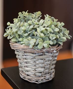 Picture of Gray Willow Basket