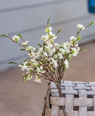 """Picture of Bliss Buds Bush, Cream, 14"""""""