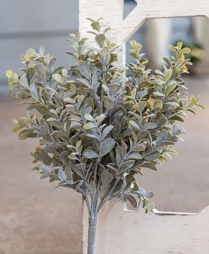 Picture of Pebble Eucalyptus Bush, 14""