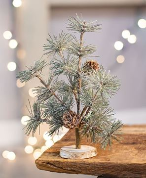 """Picture of Icy Evergreen Tahoe Tree - 9"""""""