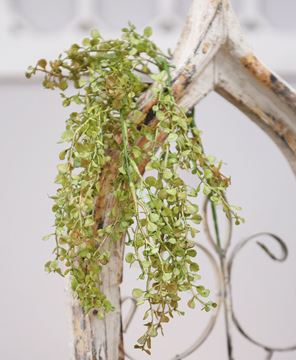 "Picture of 19"" Hanging Baby's Grass"