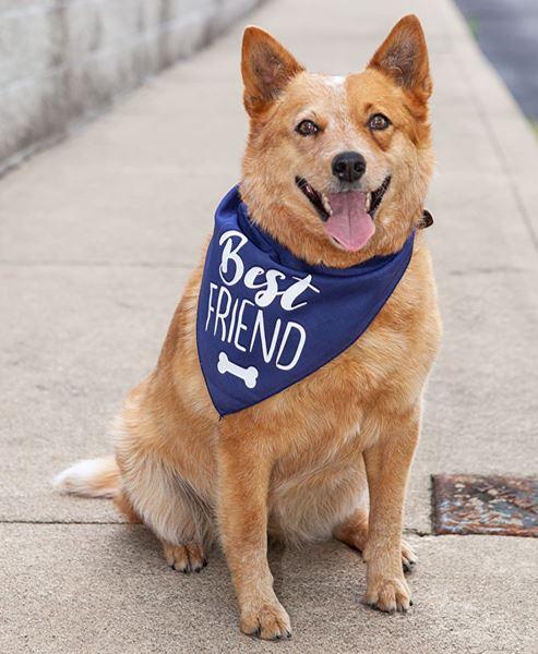 Picture of Best Friend Doggie Bandana