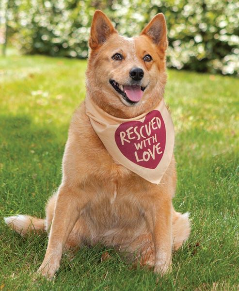 Picture of Rescued With Love Doggie Bandana