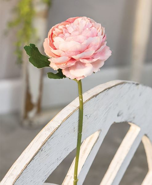 Picture of Peony Stem, Blush