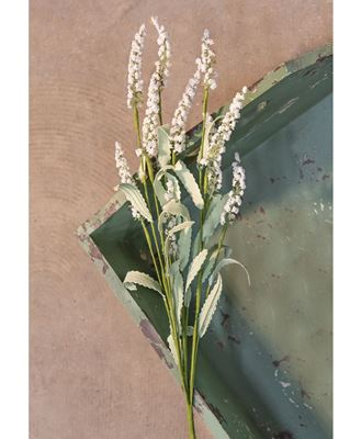 Picture of White Heather Spray