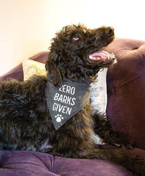 Picture of Zero Barks Given Dog Bandana