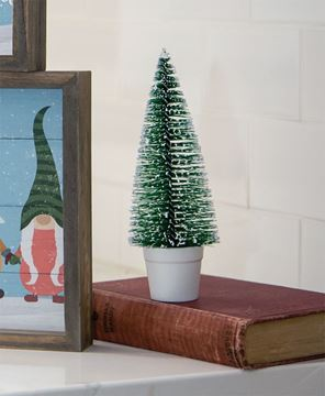 """Picture of Potted Snowy Bottle Brush Tree, 7"""""""