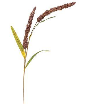 """Picture of Burgundy Millet Stem, 30"""""""