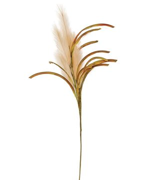 """Picture of Natural Pampas Spray, 31"""" H"""