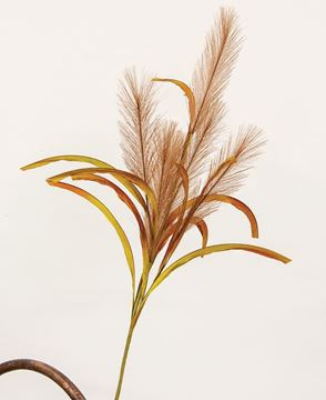 """Picture of Brown Pampas Spray, 31"""""""