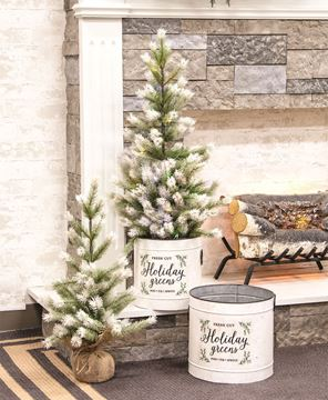 Picture of Frost Fade Pine Tree, 2 ft