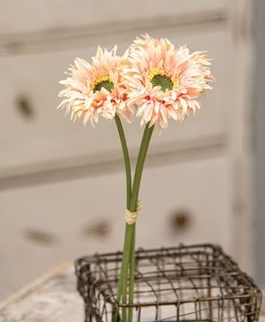 Picture of Triple Gerbera Daisy Bouquet, Peach