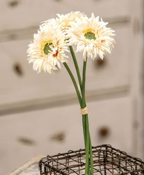 Picture of Triple Gerbera Daisy Bouquet, Cream Pink