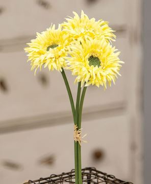 Picture of Triple Gerbera Daisy Bouquet, Light Yellow