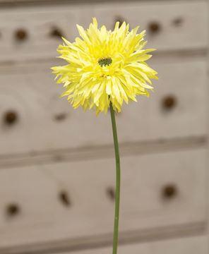 Picture of Gerbera Daisy Stem, Lemon Yellow