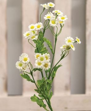 Picture of Chamomile Flower Spray, White