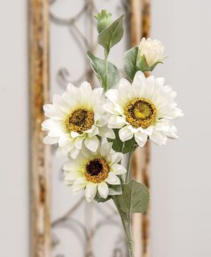 Picture of Sunflower Blooms Spray, White