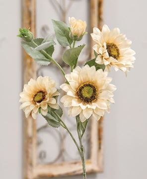 Picture of Sunflower Blooms Spray, Champagne